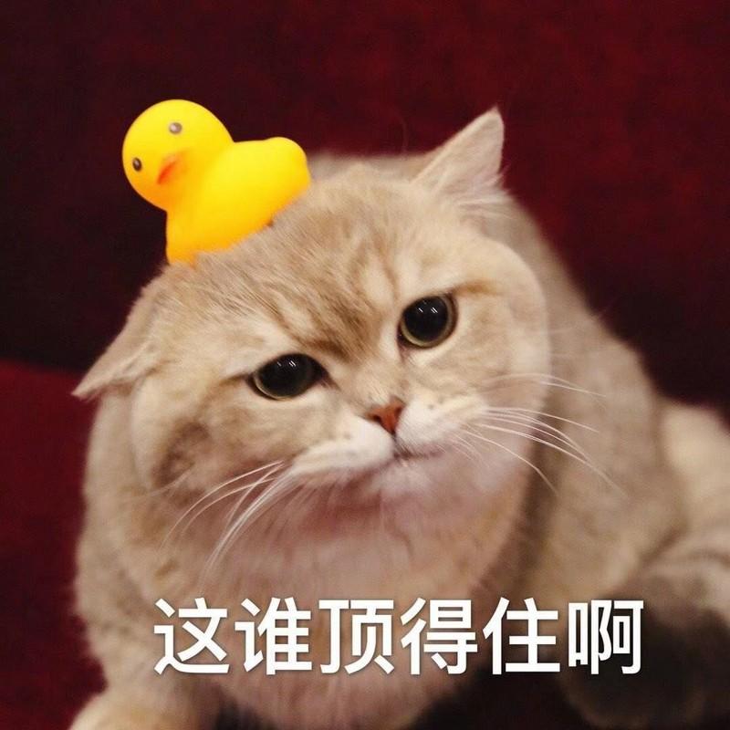 轩子巨2兔虎牙直播一周年 2月1日海量周边豪礼在线撩人-C3动漫网